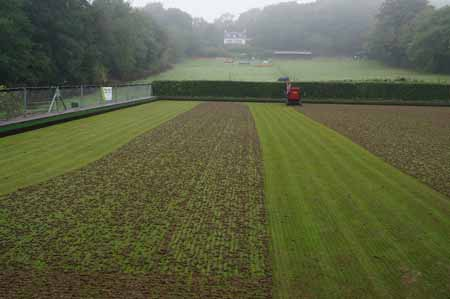 Picture of partially hollowtines green